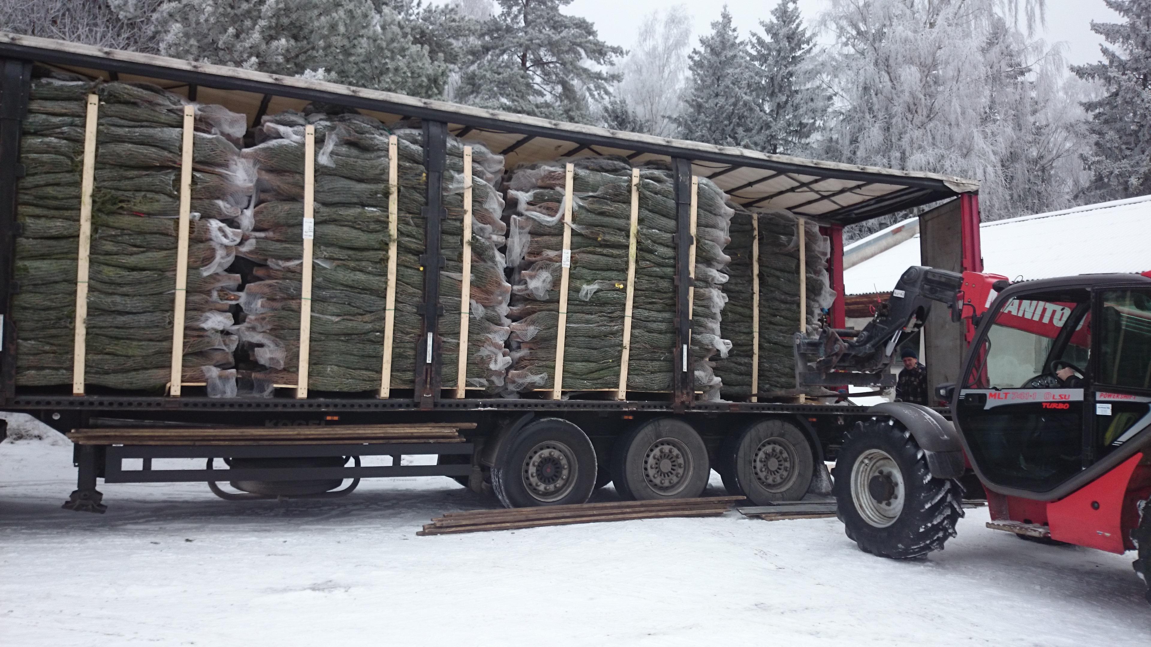 Jõulukuuskede transport
